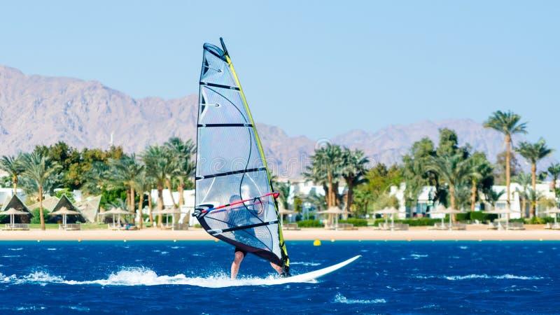 在红海的波浪的风帆冲浪者乘驾海滩的背景的与棕榈树和高山的在埃及宰海卜 库存图片