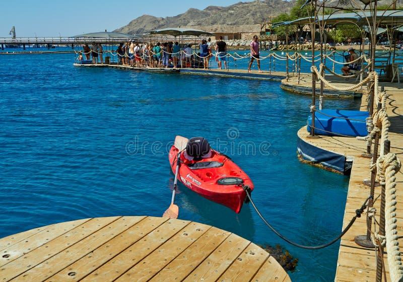 在红海的海豚礁石 免版税库存照片
