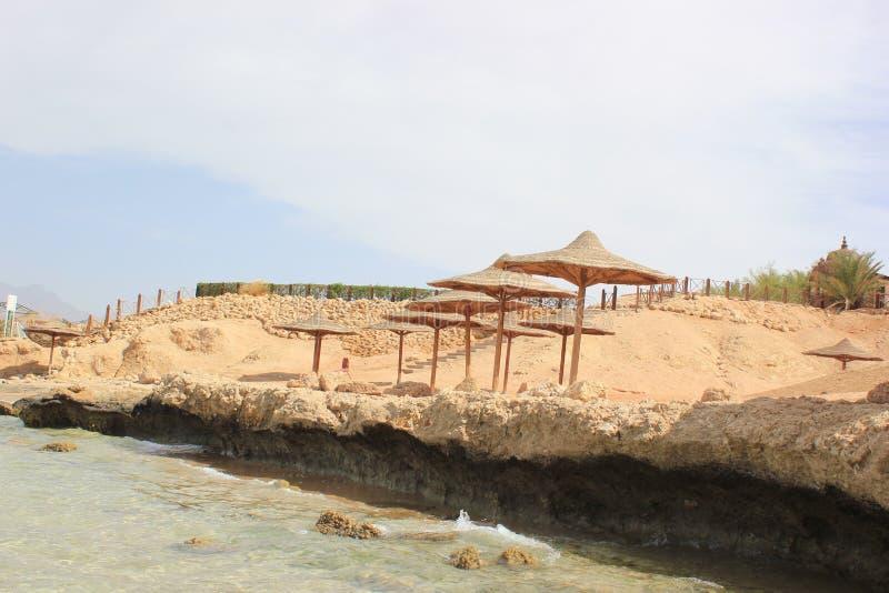 在红海的狂放的海滩 免版税库存图片