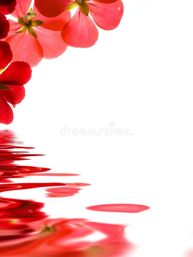 在红潮的花 库存图片