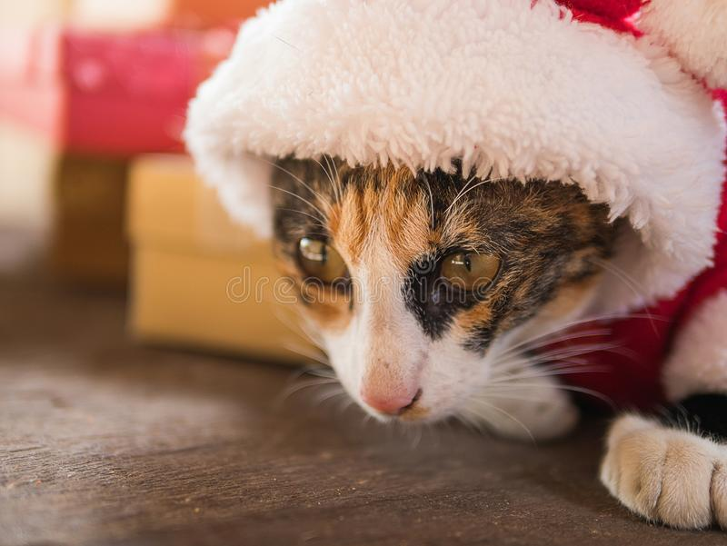 在红色圣诞老人帽子的圣诞节猫 免版税库存照片