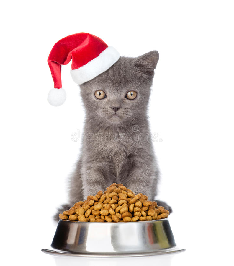 在红色圣诞老人帽子的小猫有碗的干猫食 在白色 库存照片