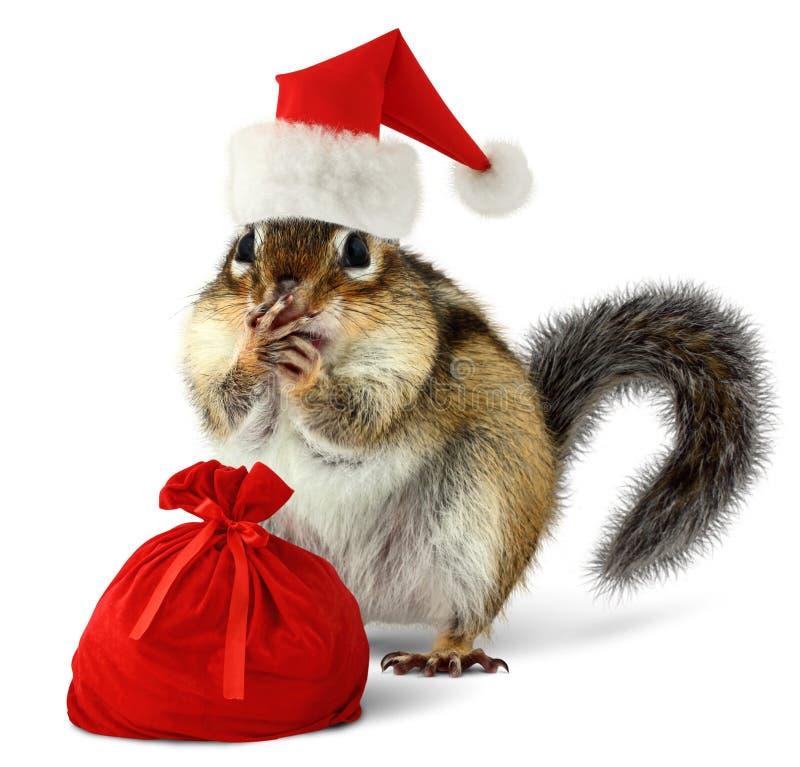 在红色圣诞老人帽子的花栗鼠与圣诞老人袋子 免版税库存照片