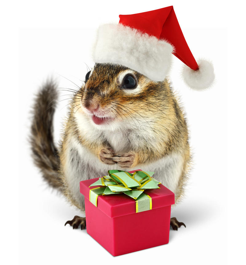 在红色圣诞老人帽子的花栗鼠与礼物盒 库存照片