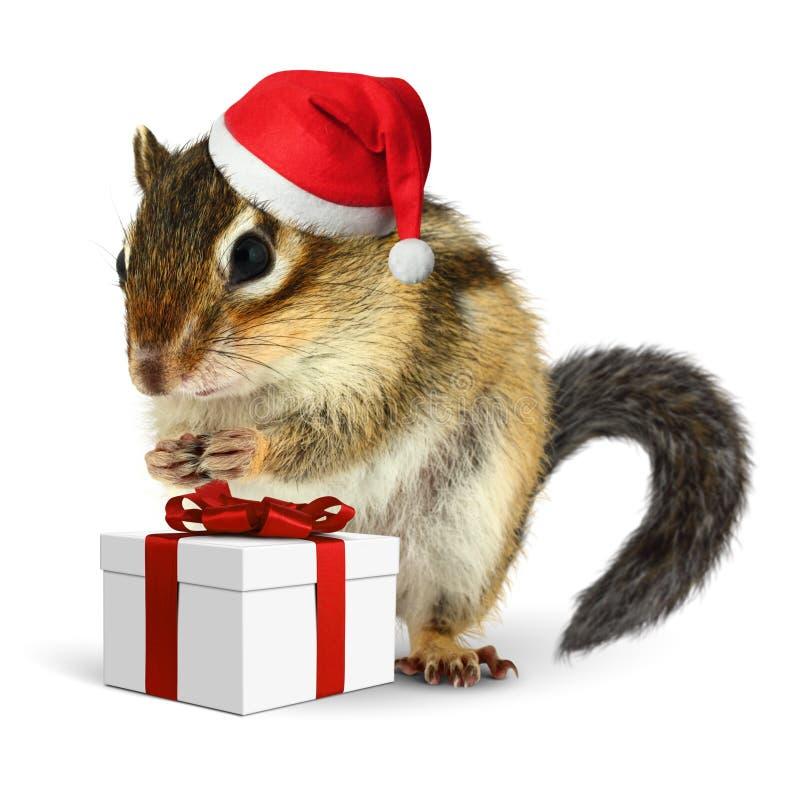 在红色圣诞老人帽子的花栗鼠与礼物盒 图库摄影