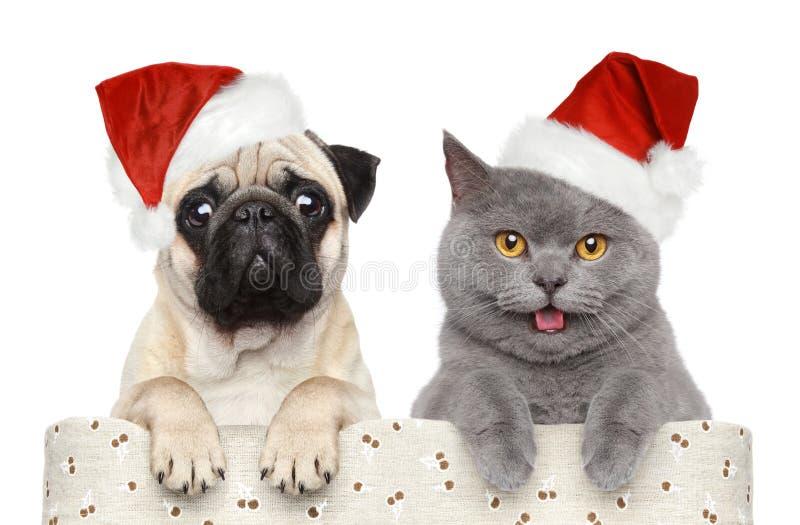 在红色圣诞节帽子的狗和猫 免版税库存照片