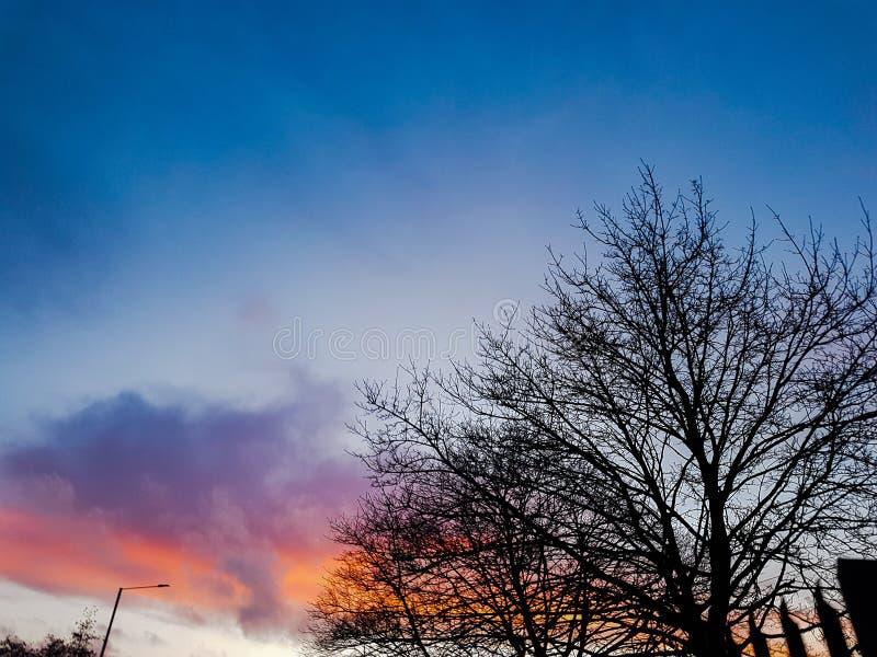 在红色天空日落的Silouette树 库存照片