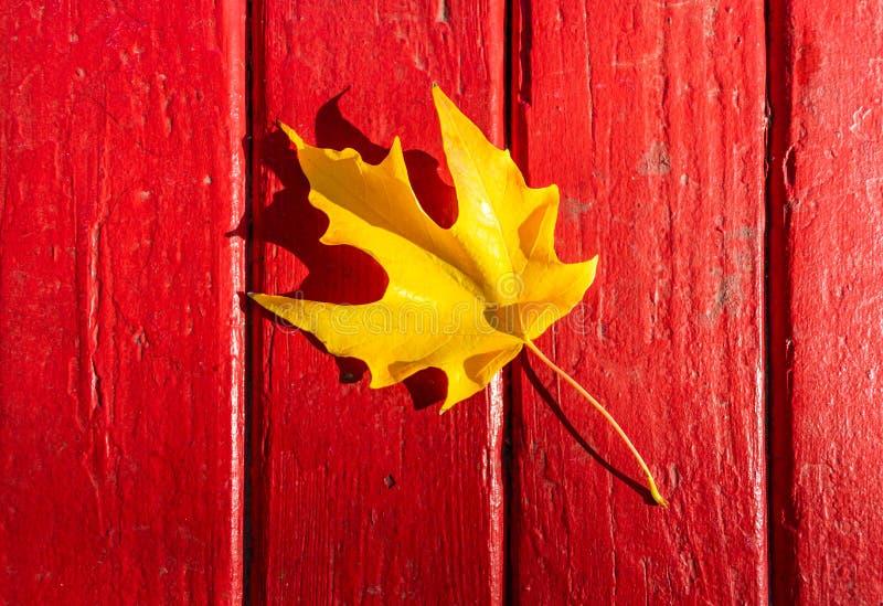 在红色木表上的唯一金黄秋天叶子 库存照片