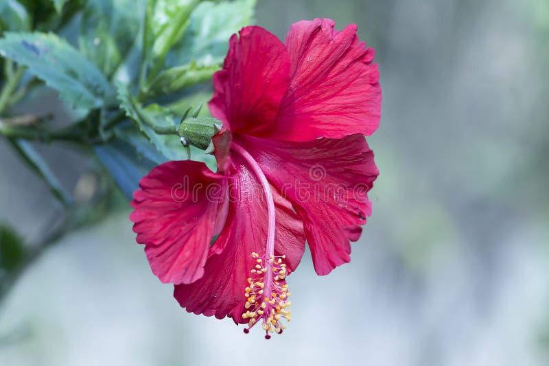 在红色的花 库存照片