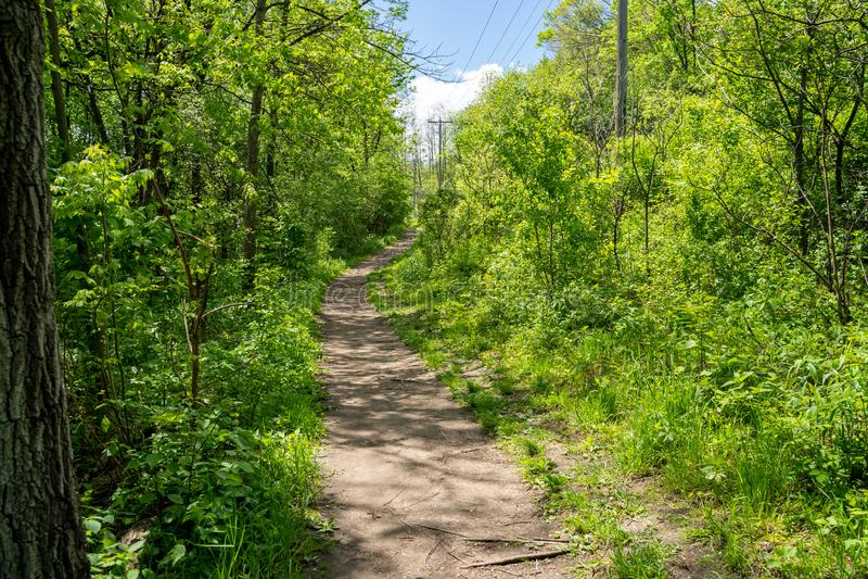 在红色翼明尼苏达的土供徒步旅行的小道,在远足区域的谷仓虚张声势 足迹由绿色植被和树围拢 库存图片