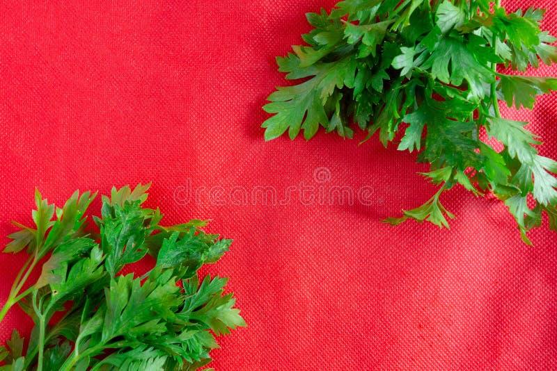 在红色背景的绿色叶子 在对比生动的织品的两新荷兰芹束 春天和夏天健康饮食食物概念 免版税库存照片