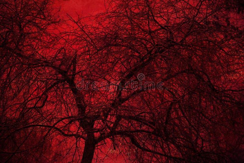 在红色背景的艺术照片神秘的树 两次曝光 库存照片