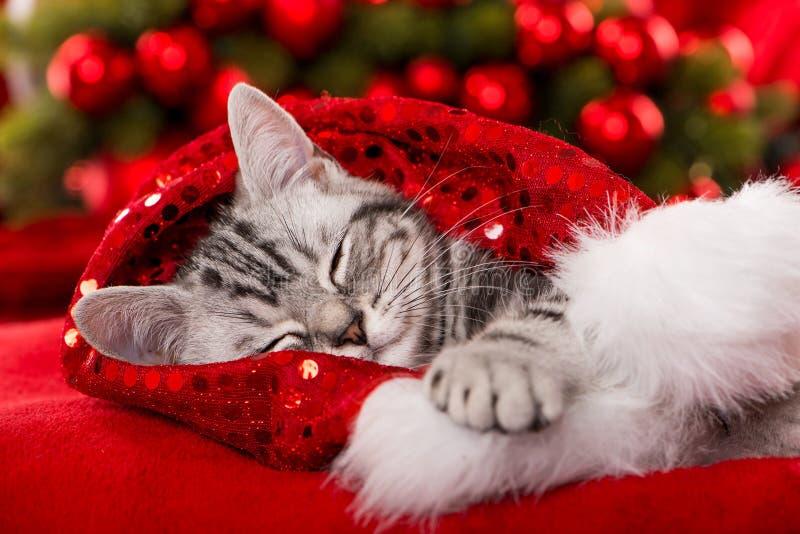 在红色背景的逗人喜爱的睡觉圣诞节小猫 库存图片