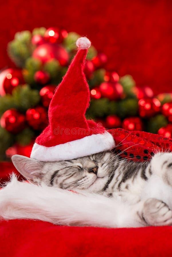 在红色背景的逗人喜爱的睡觉圣诞节小猫 图库摄影