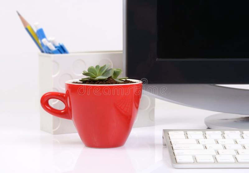 在红色陶瓷杯子的小仙人掌在办公桌上 免版税库存图片