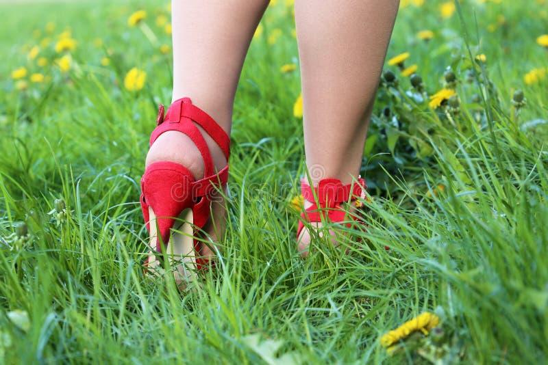 在红色鞋子的女性腿在草的高跟鞋,走在有蒲公英花的一个绿色草甸的妇女 库存图片