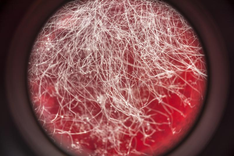 在红色饮料,在食物,微生物学宏观抽象背景的真菌发展的食物模子 免版税图库摄影