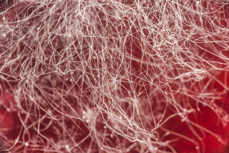 在红色饮料,在食物,微生物学宏观抽象背景的真菌发展的食物模子 库存照片