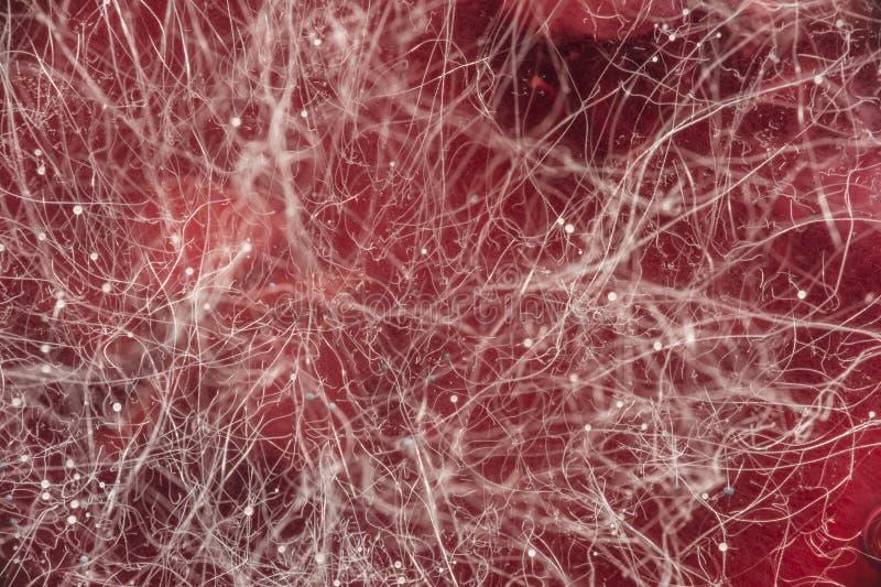 在红色饮料,在食物,微生物学宏观抽象背景的真菌发展的食物模子 免版税库存图片