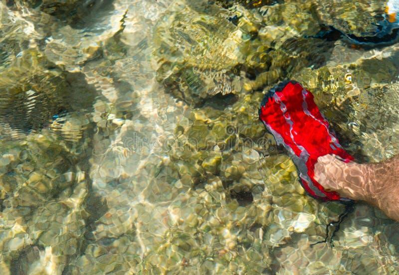 在红色水色的男性脚在礁石和珊瑚附近穿上鞋子在海下 免版税库存照片