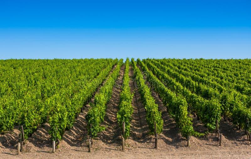 在红葡萄酒,法国附近的葡萄园风景 库存照片