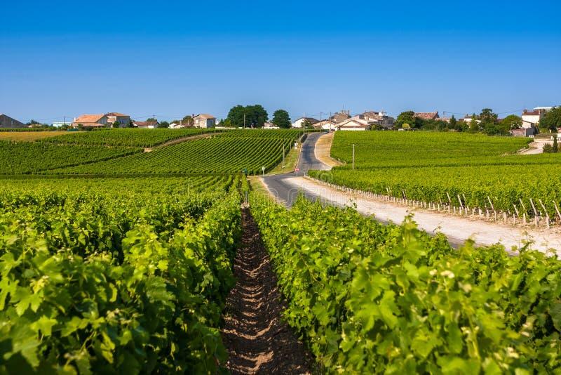 在红葡萄酒,法国附近的葡萄园风景 免版税库存照片