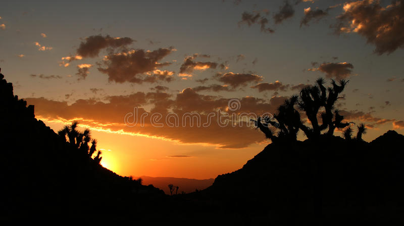 在约书亚树国家公园的精采日落 库存图片
