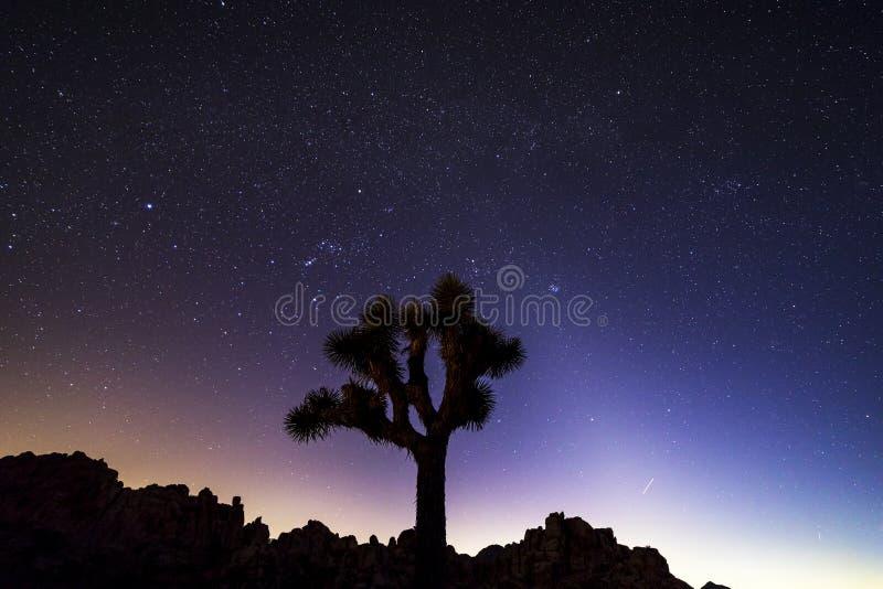 在约书亚树国家公园,加利福尼亚的夜空 免版税库存图片
