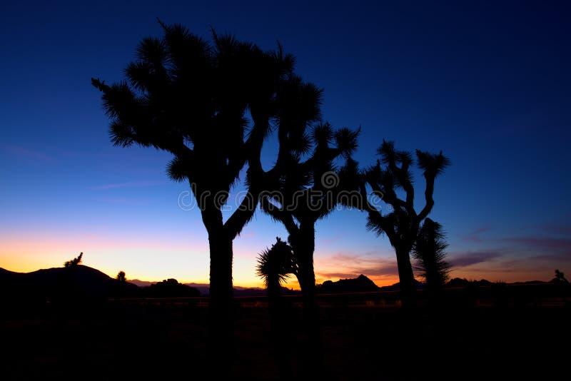 在约书亚树,约书亚树国家公园,美国的日落 免版税库存图片