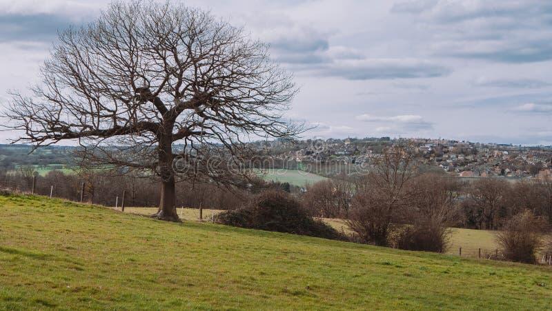 在约克夏乡下风景的树 免版税库存照片