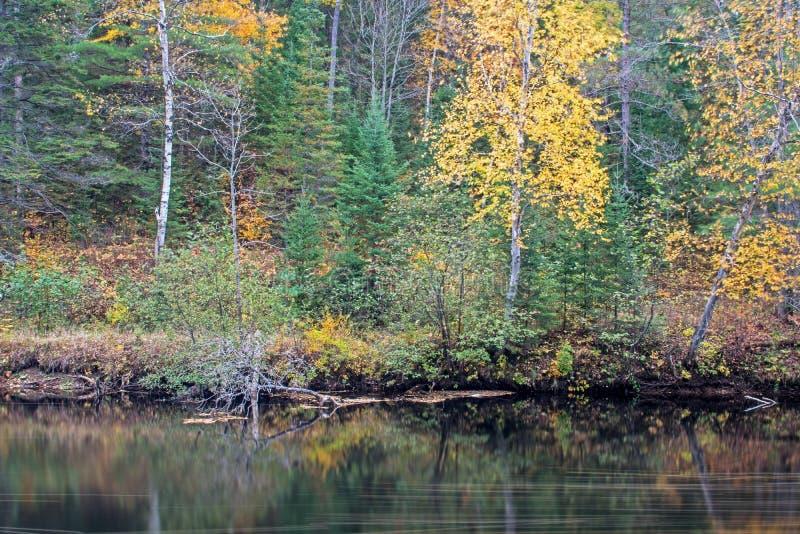 在约克河的秋天颜色 库存图片