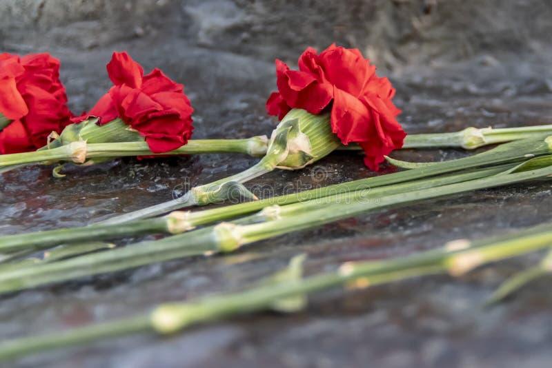 在纪念石头看见的红色康乃馨花 免版税库存图片