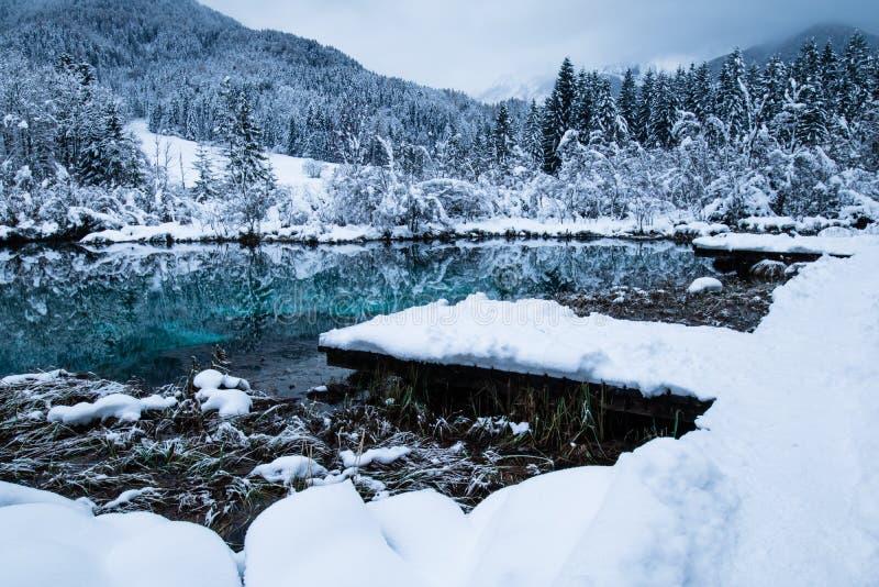 在纯净的湖Zelenci多云日出的,克拉尼斯卡戈拉,斯洛文尼亚的美好的冬天风景 免版税库存图片
