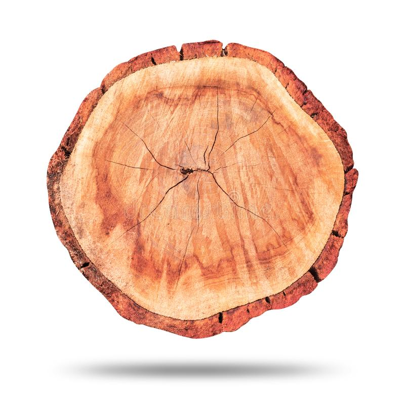 在纯净的白色背景或木日志隔绝的木树桩 树桩和空白的表面顶视图设计的 r 免版税图库摄影