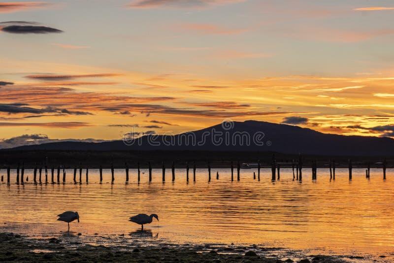 在纳塔莱斯港海岸的日落在湖的两只鸭子 库存图片