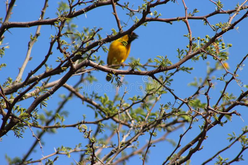 在纳米比亚夺取的鸟 库存图片