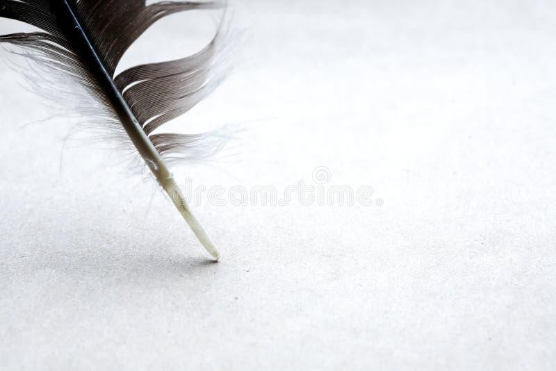 在纸张的羽毛 库存照片