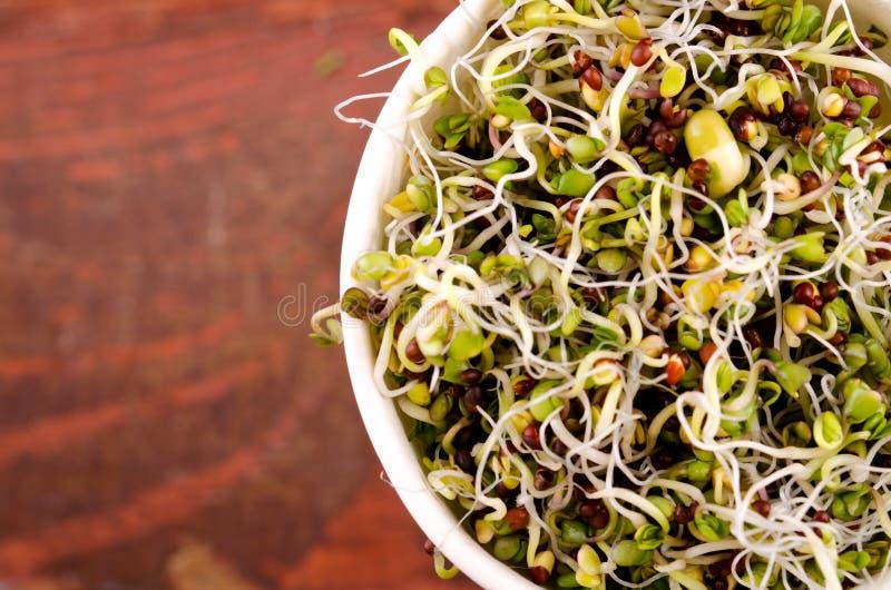 在纸杯的Microgreens分类 健康蔬菜沙拉用新鲜的未加工的新芽 免版税库存图片