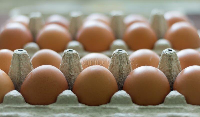 在纸板箱的鸡鸡蛋 免版税库存照片