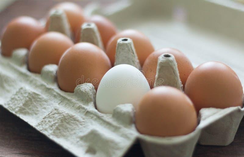 在纸板箱的黄色和一只白色鸡鸡蛋 图库摄影