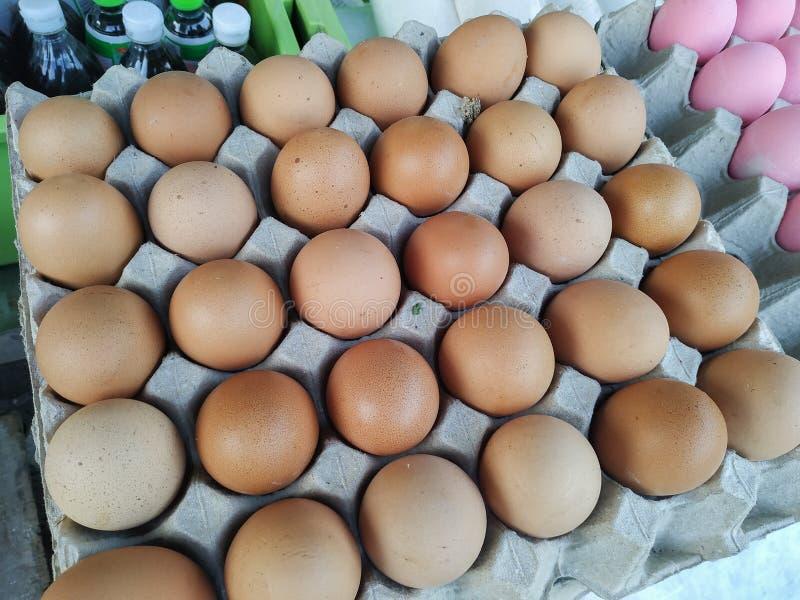 在纸盘区的鸡鸡蛋 免版税库存图片