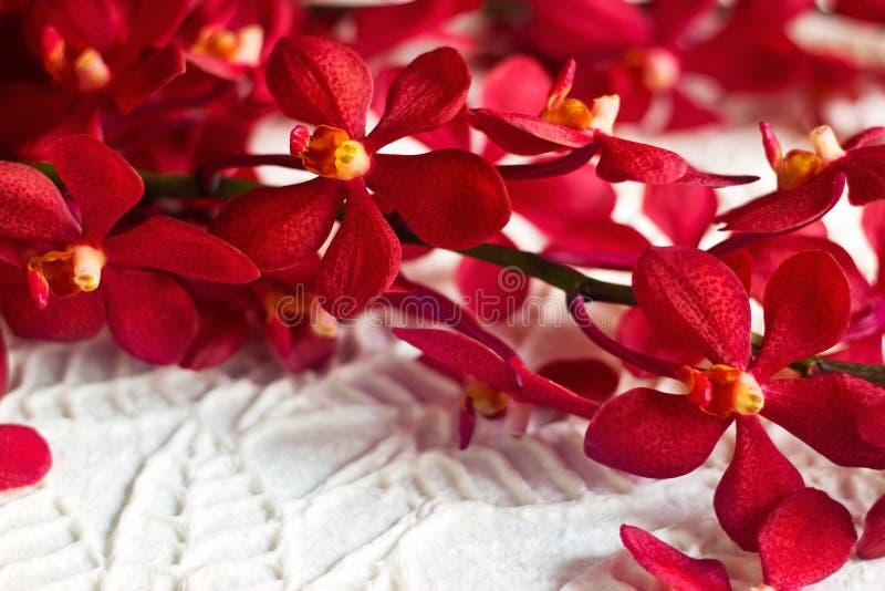 在纸纹理叶子形状背景,软的焦点的红色兰花花 免版税库存图片