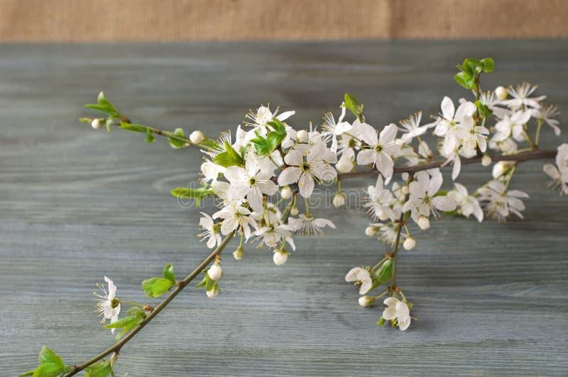 在纸纹理的开花的分支 wabi sabi日本式  免版税库存图片