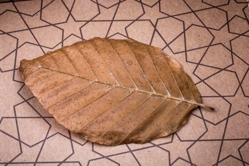 在纸背景安置的干燥叶子 免版税图库摄影