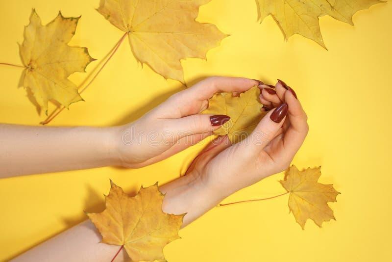 在纸黄色背景,秋天手关心概念的美女的手 免版税库存照片