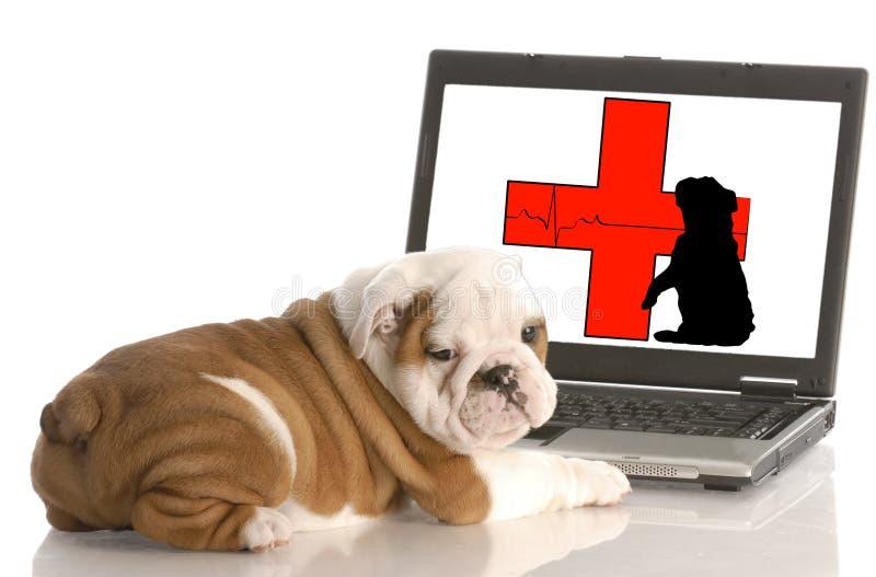 在线动物健康 库存照片