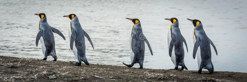 在线的五企鹅国王在海滩 库存照片
