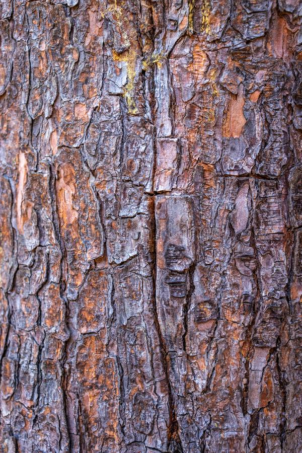 在细节的树五颜六色的皮肤 库存照片