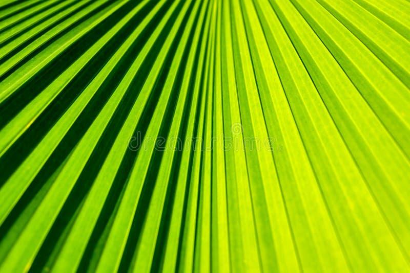 在细节的棕榈叶 免版税库存图片