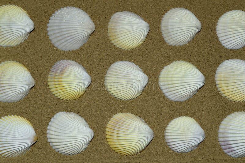 在织地不很细沙子的美丽的贝壳 库存图片